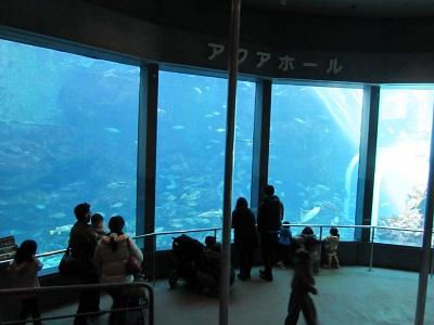 下田海中水族館002.jpg