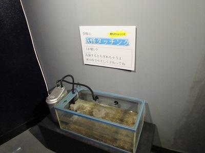 下田海中水族館003.jpg
