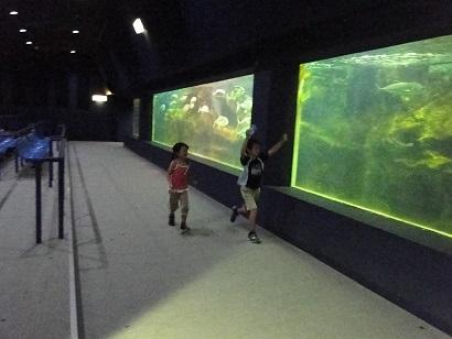 二見水族館08.jpg