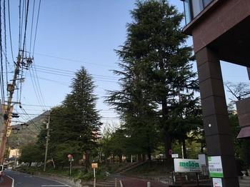 ひまわり公園001.jpg