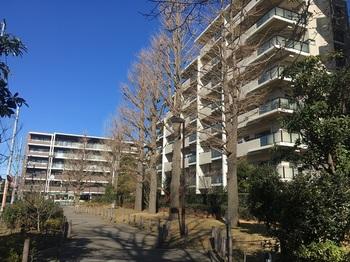 南田中いちょう並木公園005.jpg