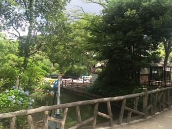 善福寺公園010.jpg