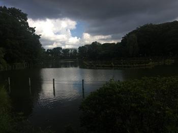 善福寺公園011.jpg
