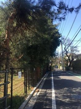 成城みつ池緑地004.jpg
