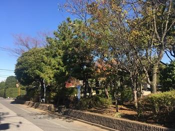 松本ふじの花公園001.jpg