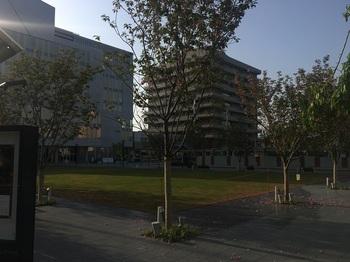 桜スクエア001.jpg