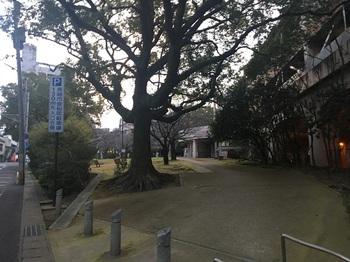 桜町公園002.jpg