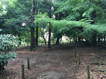 西野川樹林地002.jpg