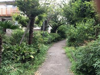 野川緑地公園004.jpg