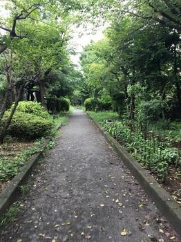 野川緑地公園005.jpg