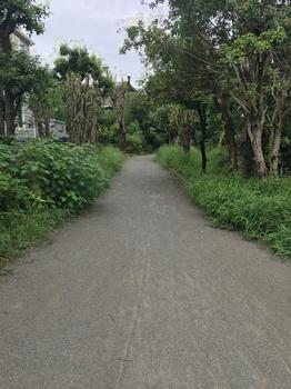 野川緑地公園010.jpg