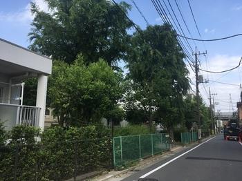 野毛西公園001.jpg